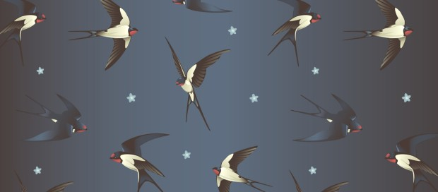 all the birds in the sky background
